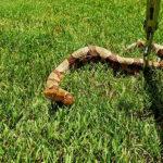 Expert snake removal